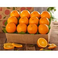 Orange - Aroma